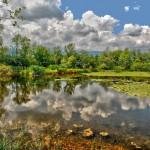 L'étang, habitat de la carpe