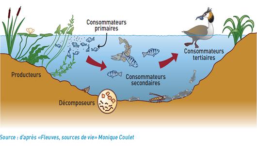 Chaine alimentaire aquatique
