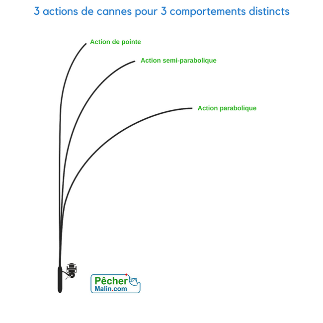 Les actions de canne